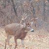AHB-18ILHENCHA-01 Illinois Deer Hunting