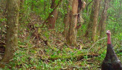 American Habitat Brokerage Deer Hunting Leases