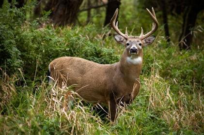 Do Not Eat Deer Advisory Near Oscoda Marsh – Outdoor News Daily